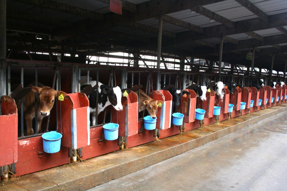 McClelland's Dairy Farm